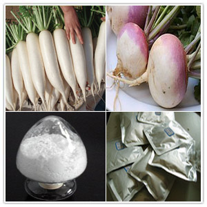 Introduction of White Turnip