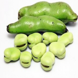 Broad bean extract
