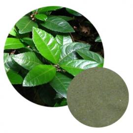 Japanese Ardisia Herb Extract