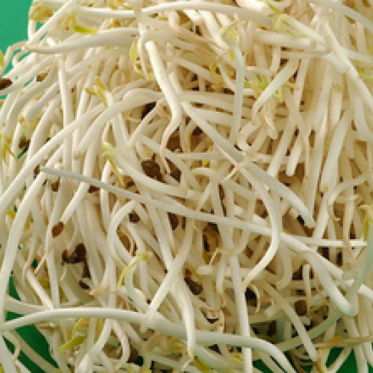 Mung Bean Sprout Extract