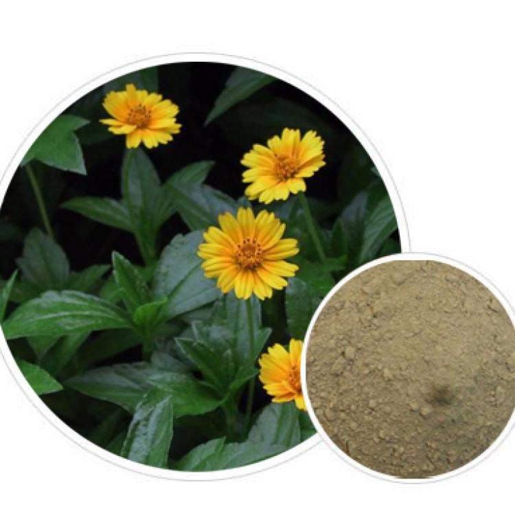 Wedelia Chinensis Extract