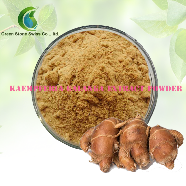 Kaempferia Galanga Extract Powder